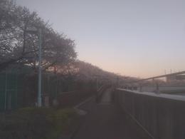 桜26-2.jpg